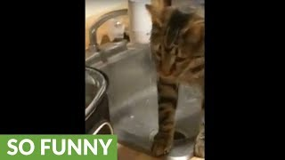 Cat drinking from faucet results in epic fail