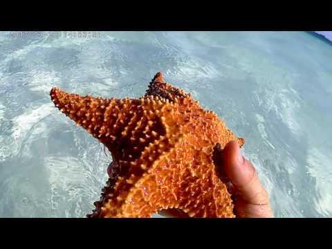 le stelle marine di Cayo Largo Cuba 2017