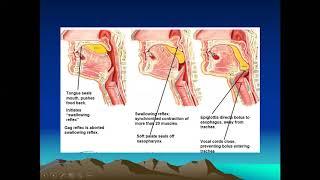 Materi perkuliahan tentang Penyakit Sirosis Hepatis / Hepatic Chirrosis yang termasuk dalam rangkaia.