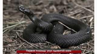 Первая помощь: укус ядовитой змеи