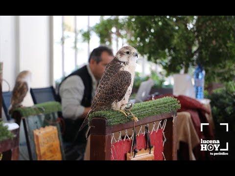 VÍDEO: La feria cinegética Cazauja celebra este fin de semana su quinta edición.
