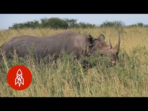 Scouring the Serengeti for the Elusive Black Rhino