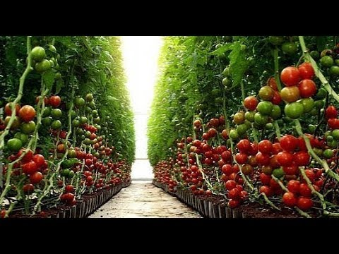 Israel Agriculture No.1 On the World  - AGRITECH 2018