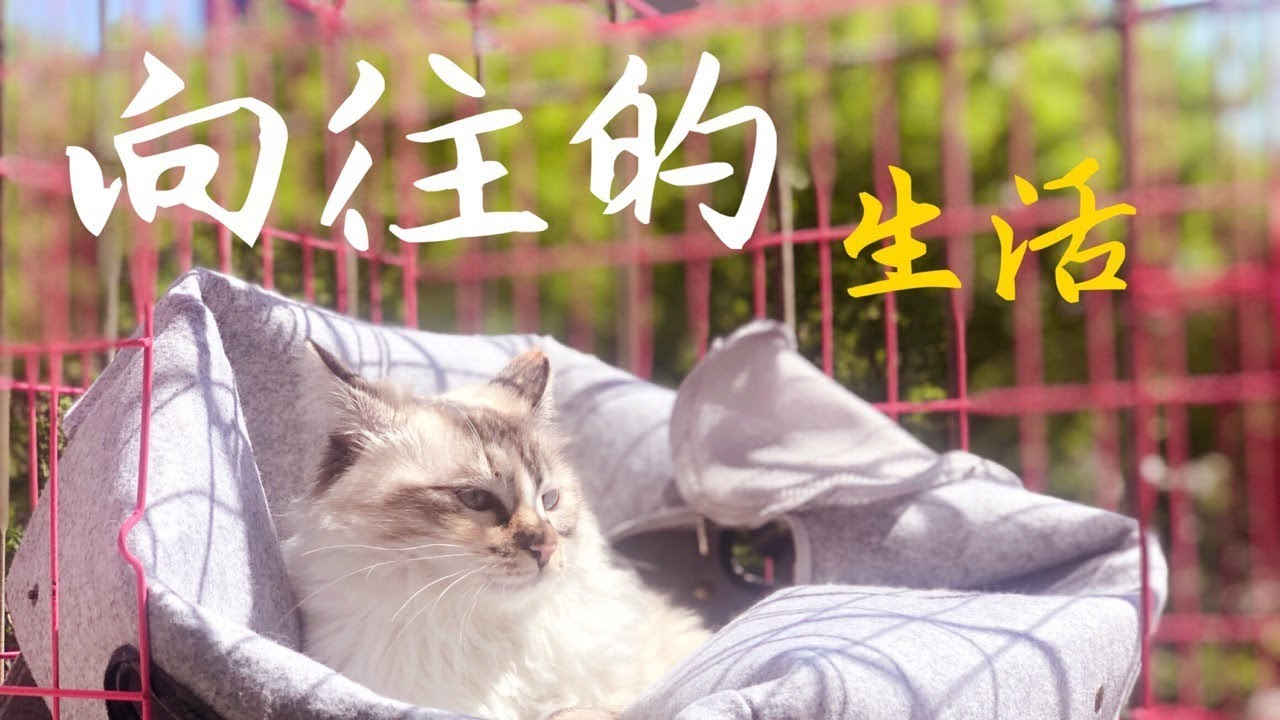 躺在窗边,看着下班的人们,伸伸懒腰-向往的猫生活~