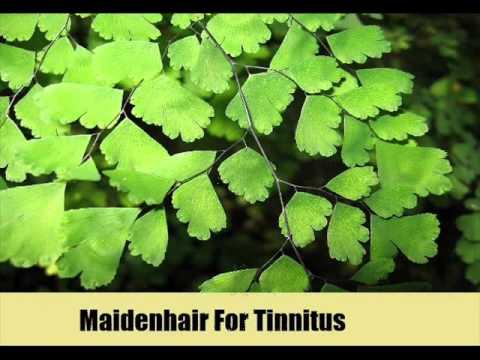 9 Herbal Remedies For Tinnitus