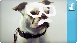 Dubstep Dog - Where's the Drop?