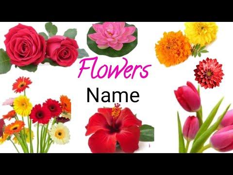 Flowers Name फूलों के नाम for kids