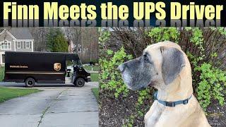 Finn Meets the UPS Driver