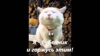 Кот бубенчик