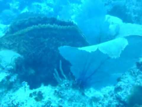 Sea Fan And Barrel Sponge On A Coral Reef In St. Lucia