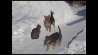 Смешные видео с участием животных.
