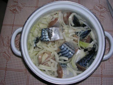 Засолка скумбрии, простой и вкусный рецепт соленой рыбы