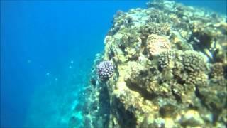 Niihau Free Dive