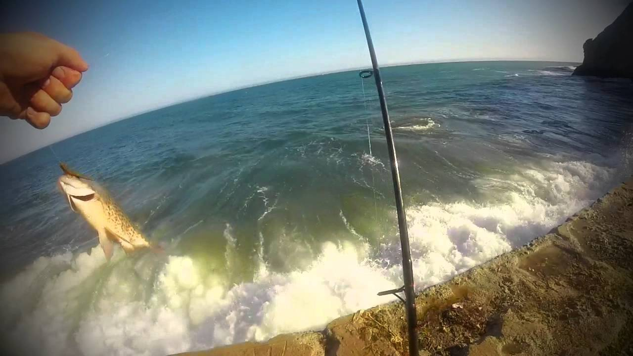 Central coast surf perch fishing youtube for Surf fishing southern california