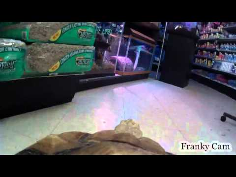 Franky T. Tortoise Strolls Around Lou's Pet Shop With His Camera