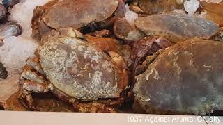 Echte Krabben zijn juist éémaal uit de mode! | Bergen op