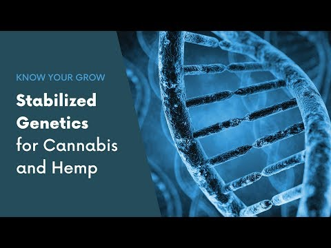 Why Stabilized Genetics are Important for Cannabis and Hemp – Know Your Grow
