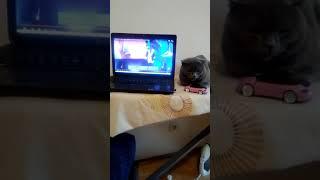 Реакция кота на исполнителя из Чехии на Евровидение