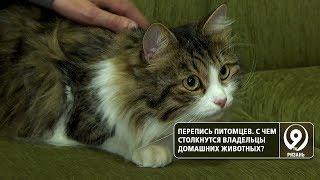 Чем может обернуться обязательная регистрация домашних животных? «9 телеканал» Рязань