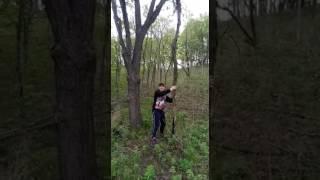 Медведь Гризли в дикой природе