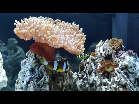 14 Days cycle and progress of my nano reef aquarium