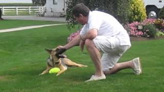 Kayla German Shepherd Dog Playing At Riehl's - Lancaster, Pa