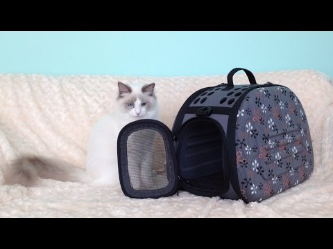 Cute kitten and funny transporter issues - Jeremy The Ragdoll Cat