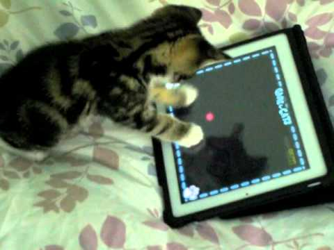 Charlie The Cat – Kitten Playing iPad 2 !!! Game For Cats Cute Funny Clever Pets Bloopers