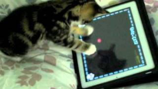 Charlie The Cat - Kitten Playing iPad 2 !!! Game For Cats Cute Funny Clever Pets Bloopers