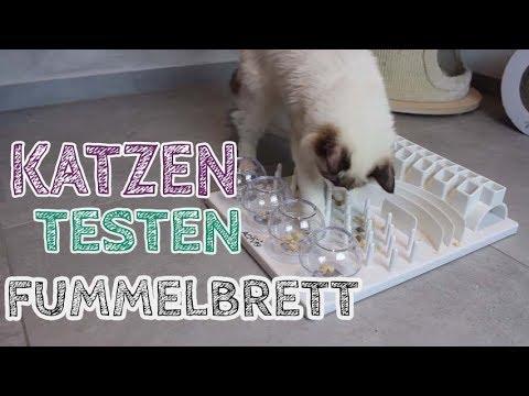 Meine KATZEN testen Fummelbrett CAT ACTIVITY FUN BOARD | Indoor Beschäftigung für Katze
