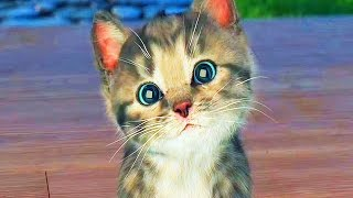 Little Kitten My Favorite Cat Compilation / Cartoon Games Kids TV