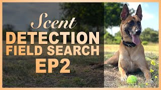 How to Teach Your Dog Scent Detection. Ep 2 Field Search.