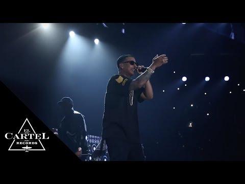 Daddy Yankee - Kingdom | Florida
