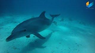 Tauchen im Roten Meer 2011 (Delfine / Diving) | inZoom | Meerwasser Live TV