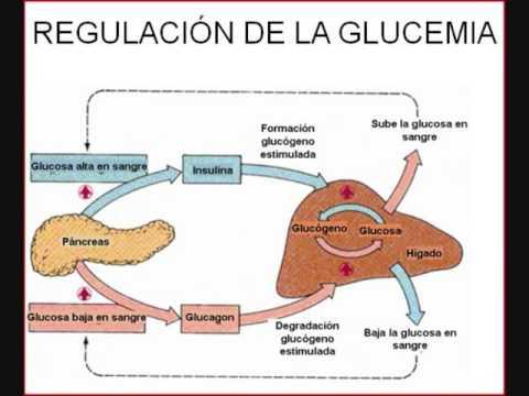 La glucemia - YouTube