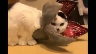 Кот цветок - раскрывается раз в 100 лет))) Смешное видео про кошек/Cat flower