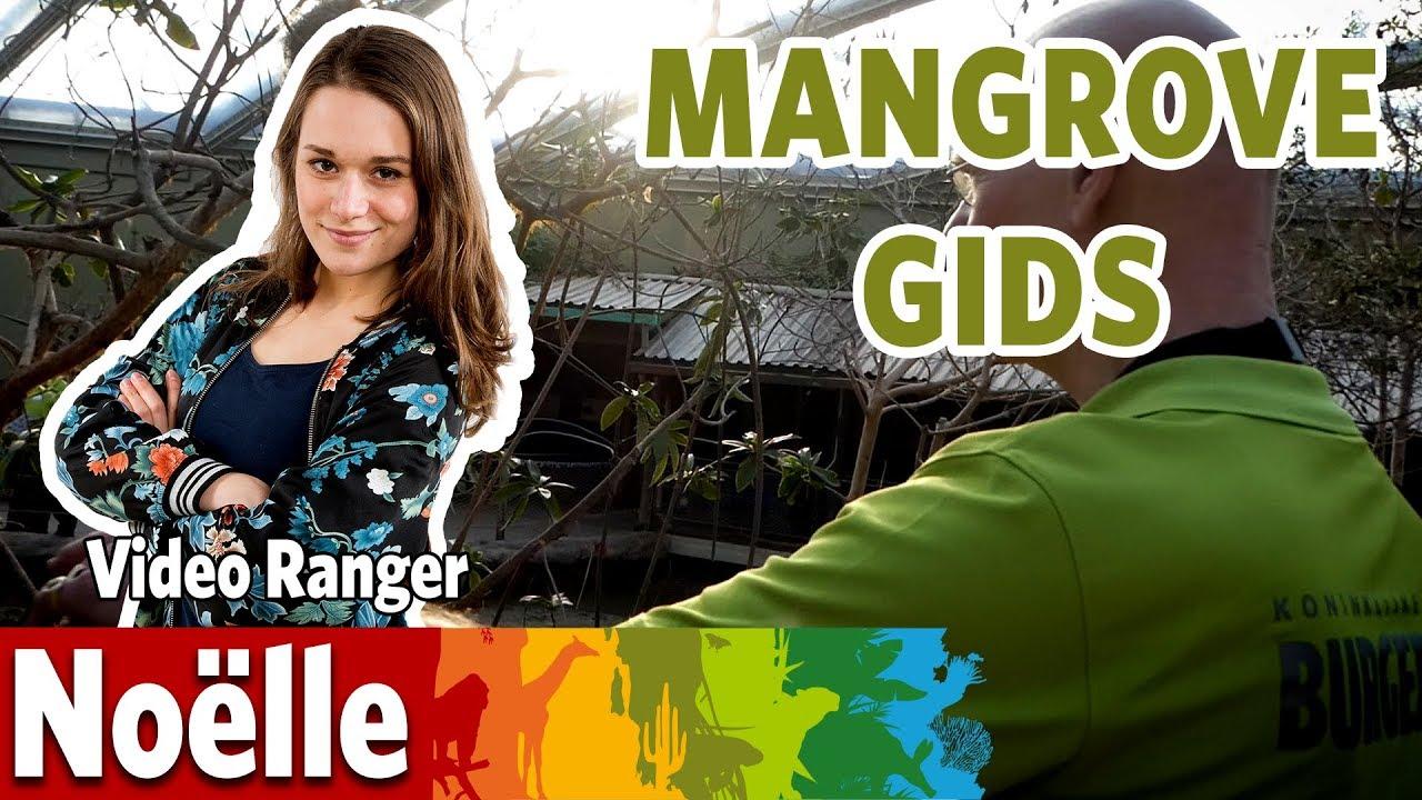 Ik loop mee met de gids in de Mangrove!