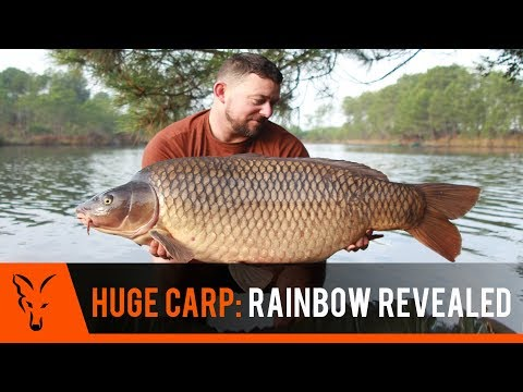 ***CARP FISHING TV *** RAINBOW REVEALED