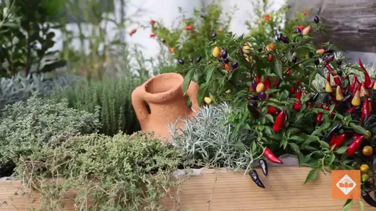 Centro Giardinaggio San Fruttuoso Garden Design Terza Parte
