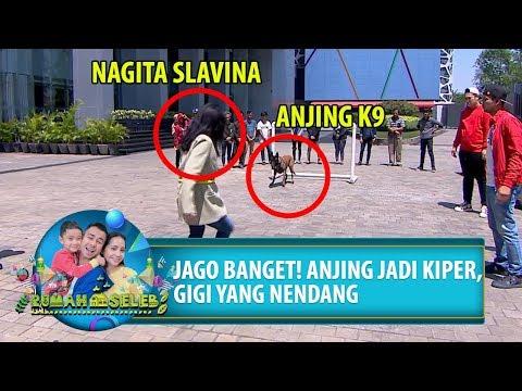 JAGO BANGET! Anjing Jadi Kiper, Gigi Yang Nendang - Rumah Seleb 21 PART 2