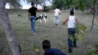 Los Almacigos Santiago Rodriguez