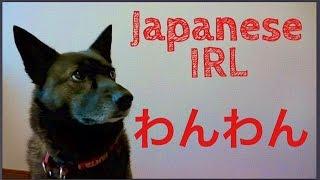 """ワンワン (WANWAN) = """"Arf arf"""" / doggie Written in either hiragana o..."""
