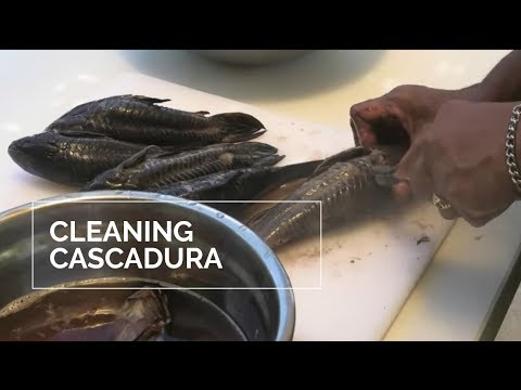 CLEANING CASCADURA FISH- CLEANING HASSAR
