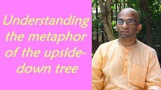 Bhakti Shastri (127) - Bhagavad Gita Chapter 15 Text 01 to 06