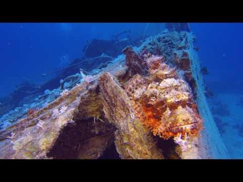 Bärtiger Drachenkopf (Scorpaenopsis oxycephala) - Rotes Meer