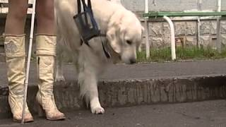 Череповчанка и её собака-поводырь