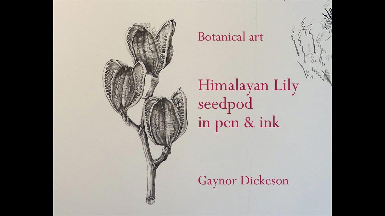 Pen and Ink - BOTANICAL ART & ARTISTS