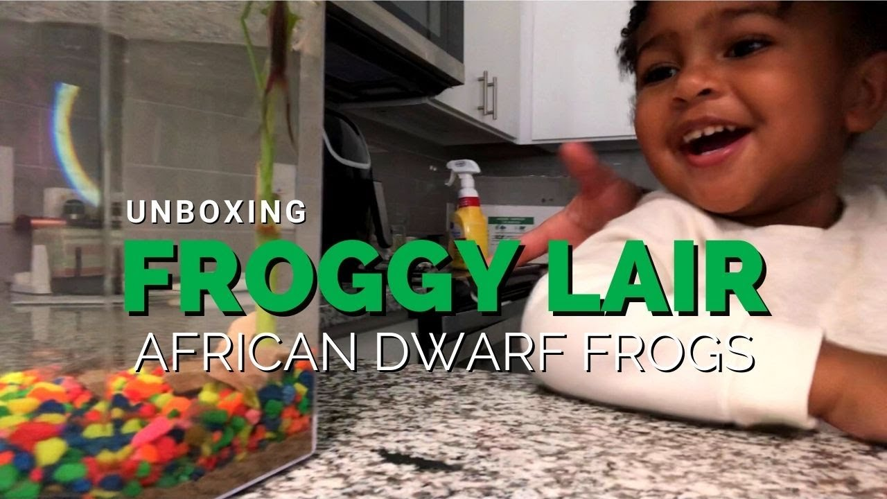 Unboxing | African Dwarf Frogs from Froggy Lair
