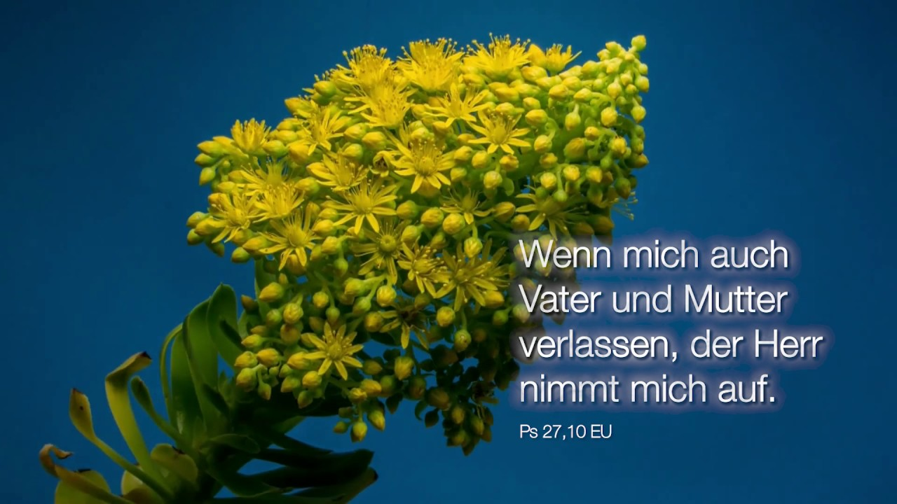 Bibelwort Psalm 27,10 - YouTube