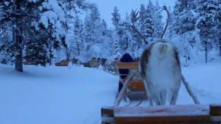 北極圏に位置する、ラップランド最北のサーリセルカで、トナカイぞりを...